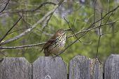 Nest Builder 1