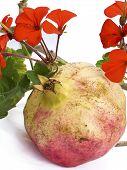 Malve silvestris and pomegranate