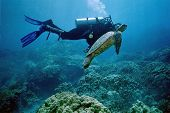 Scuba Diver Communing with Turtle