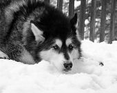 Black & White Beauty in the Snow