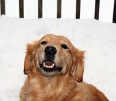 Smiling Golden Girl in the Snow