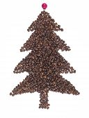 Fir Made Of Coffee Beans
