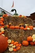 stock photo of cucurbitaceous  - opened market in colorado aspen with seasonal gourds - JPG
