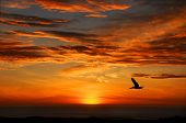 Pelican Sunset, Half Moon Bay California