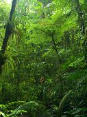Chachagua Rain Forest
