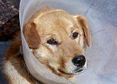 Sad Sick Dog