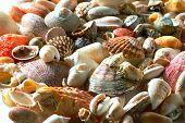 Sea Shells And Pebble Beach