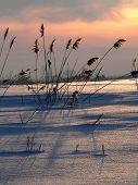 Reed On Sundown 2
