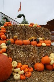 image of cucurbitaceous  - opened market in colorado aspen with seasonal gourds - JPG