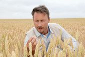 Portrait of agronomist analyzing wheat ears