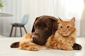 Cat And Dog Together Looking At Camera On Floor Indoors. Fluffy Friends poster