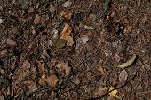Dry Leaf Background. Natural Background Dry Leaves On The Ground. Dry Autumn Leaves Orange And Brown poster