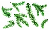 Set Of Pine Tree Branches Or Fir Tree Twig. Evergreen Or Coniferous Plant Parts With Needles Or Pric poster