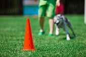 Red Cone And Dog Running In Background During Obedience Training poster