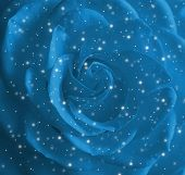 Xmas Rose