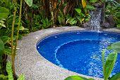 Swimming Pool In Jungle