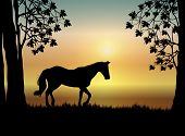 Horse At Sunrise