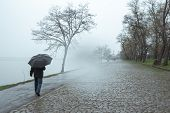 A Man Walks Under An Umbrella In The Rain. Man Goes Under An Umbrella In The Fog. Adult Man Walking  poster