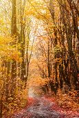 Beautiful Curved Road In The Autumn Vibrant Forest Landscape. Fall Background. poster