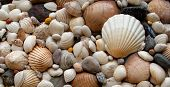 stock photo of cockle shell  - Shells - texture / background - pebbles and stones from beach.