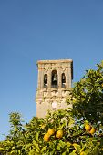 Spanish Oranges And Bell Tower