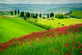 pic of descending  - Hill covered by red flowers overlooking a road lined by cypresses on a sunny day near Certaldo Tuscany Italy - JPG