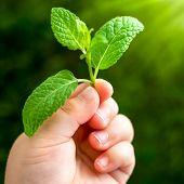 Macro Close Up Of Infants Hand Holding Leaf.