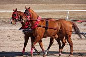 pic of chariot  - horses chariot racing on a sandy track - JPG