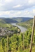 Mosel River With Vineyard