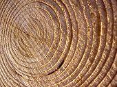 closeup shot of tree-rings