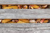 Corn Crib Closeup