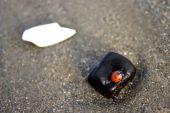 Ladybug On Rock
