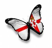 Ulster Flag Butterfly, Isolated On White