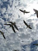 Birds In Flight 1