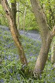 stock photo of ravines  - Carbrook Ravine Nature Reserve - JPG