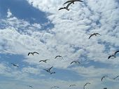 Seagulls In Flight 2