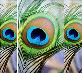 Iridescent Eye
