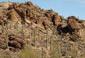 Saguaro Country