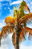 A palm tree swaying in the breeze against a blue sky