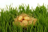 Golden easter eggs in a nest. Green grass and white background.