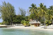 A small, pristine thatched hut on the Caribbean Sea surrounded by palms and other trees.