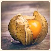 Single physalis fruit. Filtered to look like an aged instant photo.