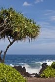 Keanae Peninsula on Maui is a popular stop on the Road to Hana.