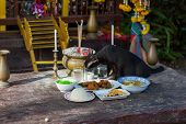 Cat eating at Buddhist temple in Koh Phi Phi Thailand