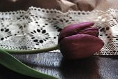Tulip and Lace. Vintage Style Photo