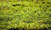 Greensward, Grass texture