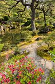 KYOTO, JAPAN - APRIL 26th  : Pink azaleas,  pond and pine trees in the Japanese garden of Ginkakuji