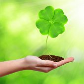 Green clover leaf in hand
