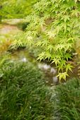 Emerald green maple and the other plants grown near the small stream in Kyoto.
