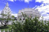 Hibiscus Bush In Wat Rong Khun